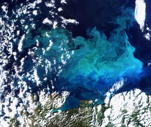 Облако планктона в Баренцевом море