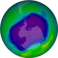 Озоновая дыра влияет на обитателей морей