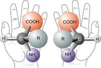 Наиболее важные молекулы жизни